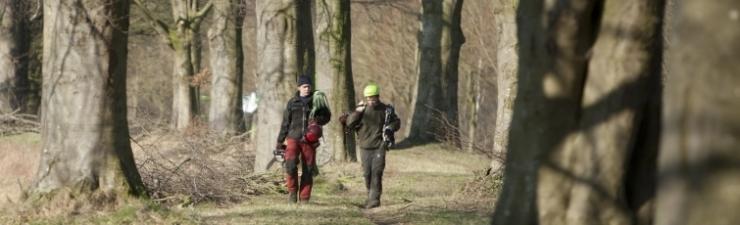 Pius Floris Baumpflege